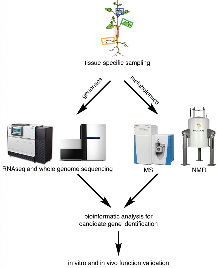 An omics approach for rapidly identifying candidate enzyme-encoding genes underlying certain specialized metabolic traits of interest in non-model eukaryotic species.