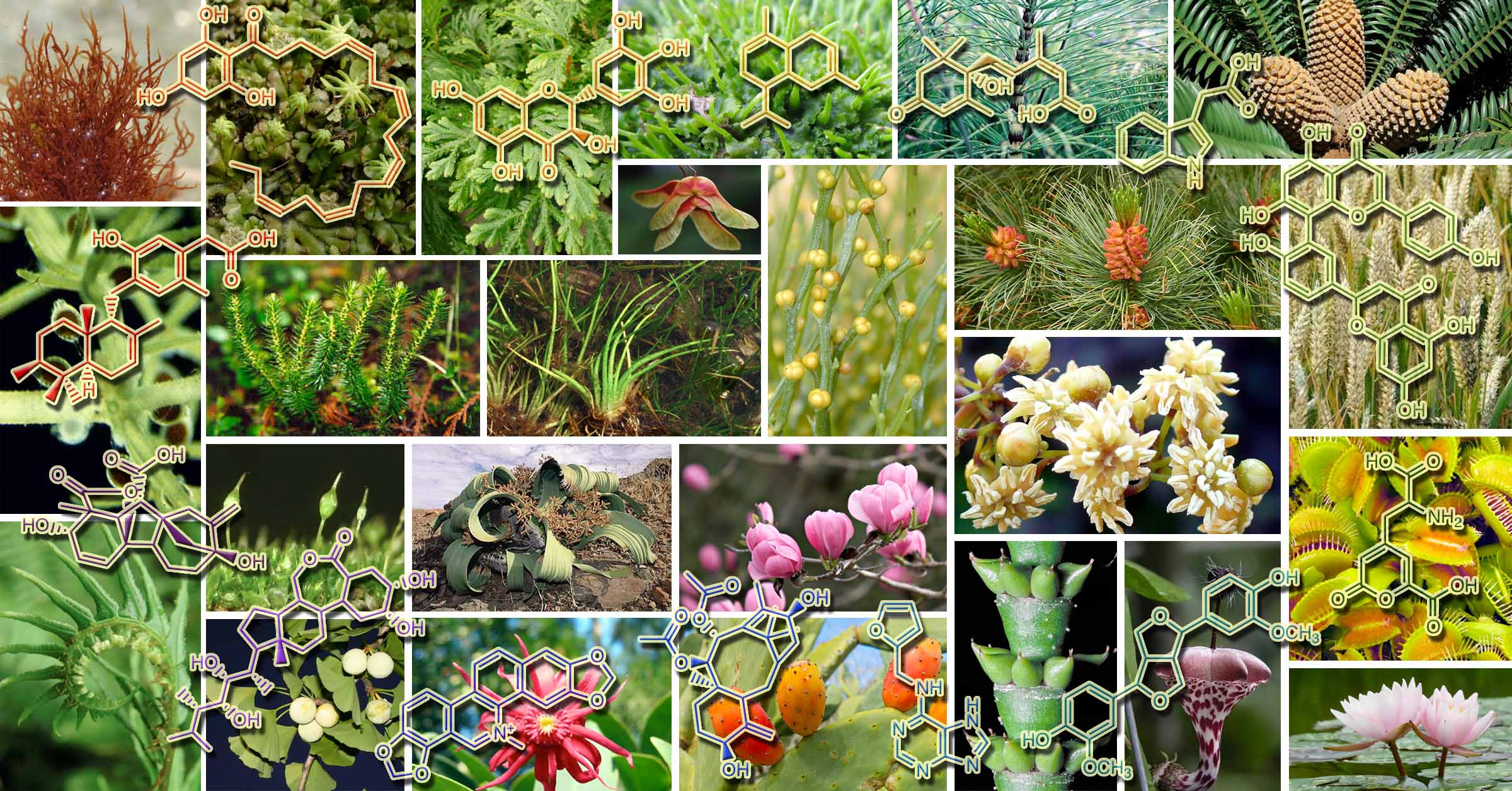 home_1_plants